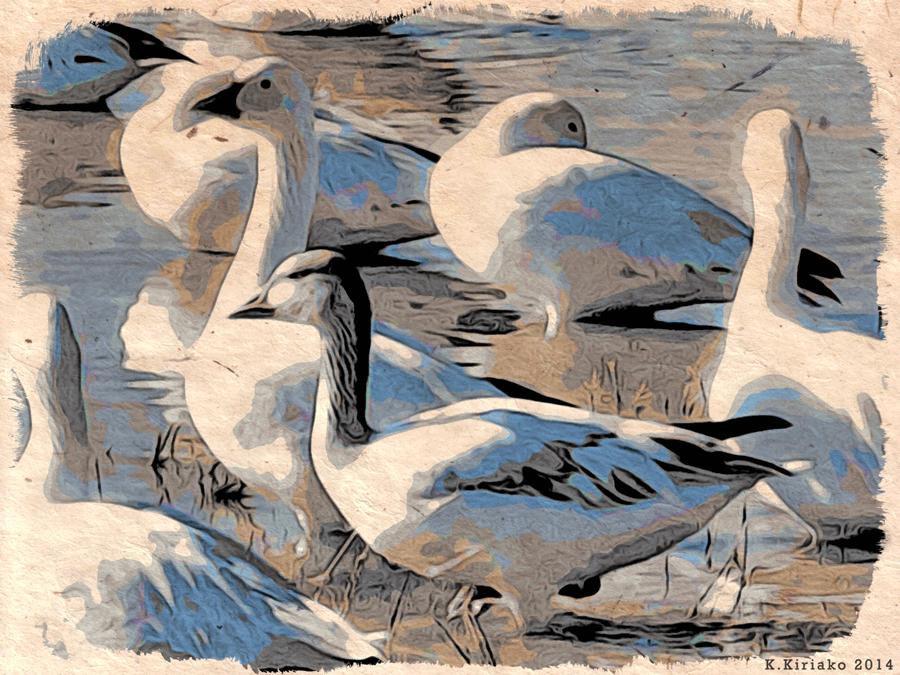 Snow Geese by Kimm Kiriako